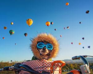 Boise hot air balloon festival